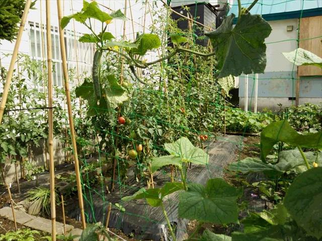 tomato2014_8_22